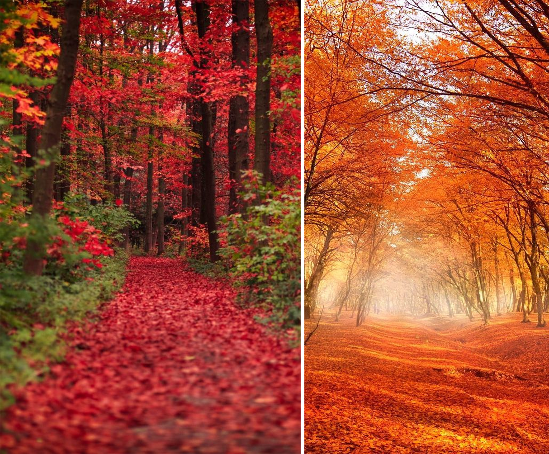 Instagram tappeti foglie