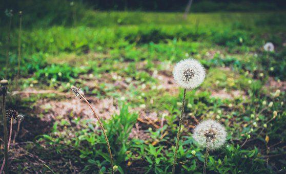 sostenibilità l'oreal Sharing beauty with all